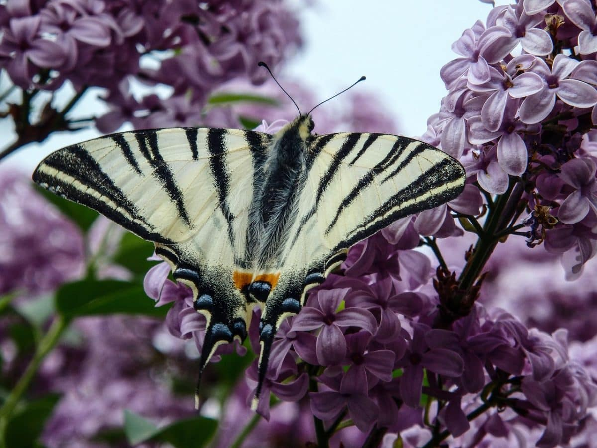Lepkék és Pillangók rajongója vagy? Eláruljuk, hogyan csalogasd őket a kertedbe!