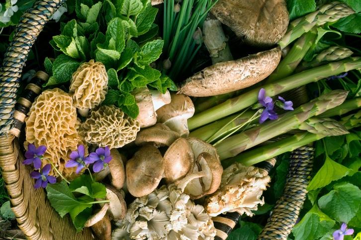 Ezek a szuper egészséges növények begyűjthetők egy kiadós séta alkalmával