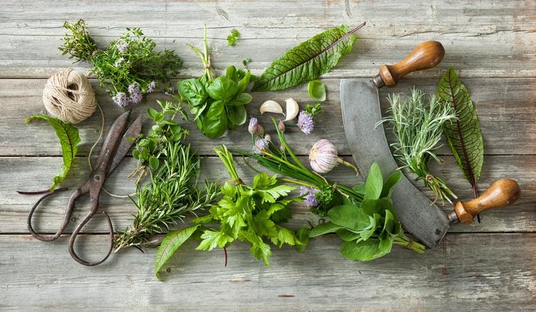 Rendkívül hasznosak és még szépek is: ha gyógynövényt ültetnél, ezeket válaszd