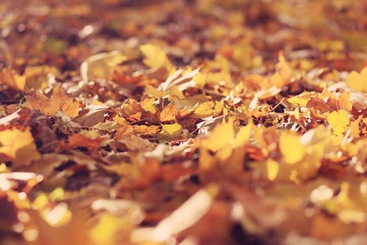 Profi komposztálási tippek – Így készüljünk az őszre