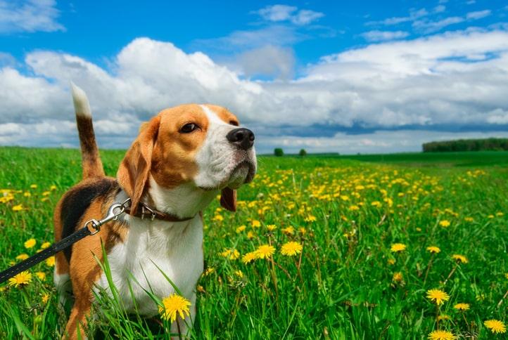4 ok, amiért a kutyások könnyebben beiktatják napirendjükbe a rendszeres mozgást