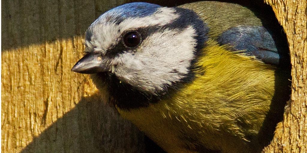 Ezek a legmenőbb madáretetők – Inspiráló ötletek azoknak, akik szeretnek barkácsolni