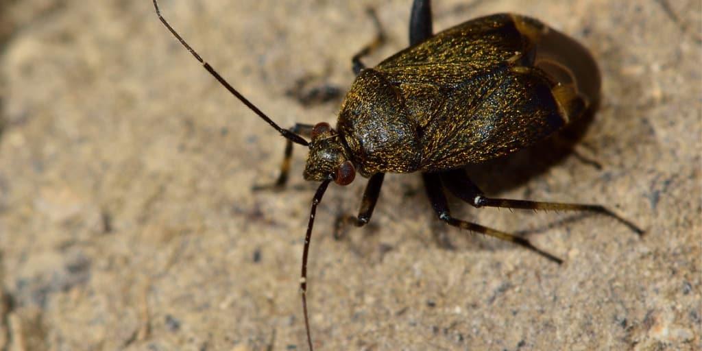 Hogyan éld túl a poloskainváziót – 5 tipp a büdös rovarok távol tartására