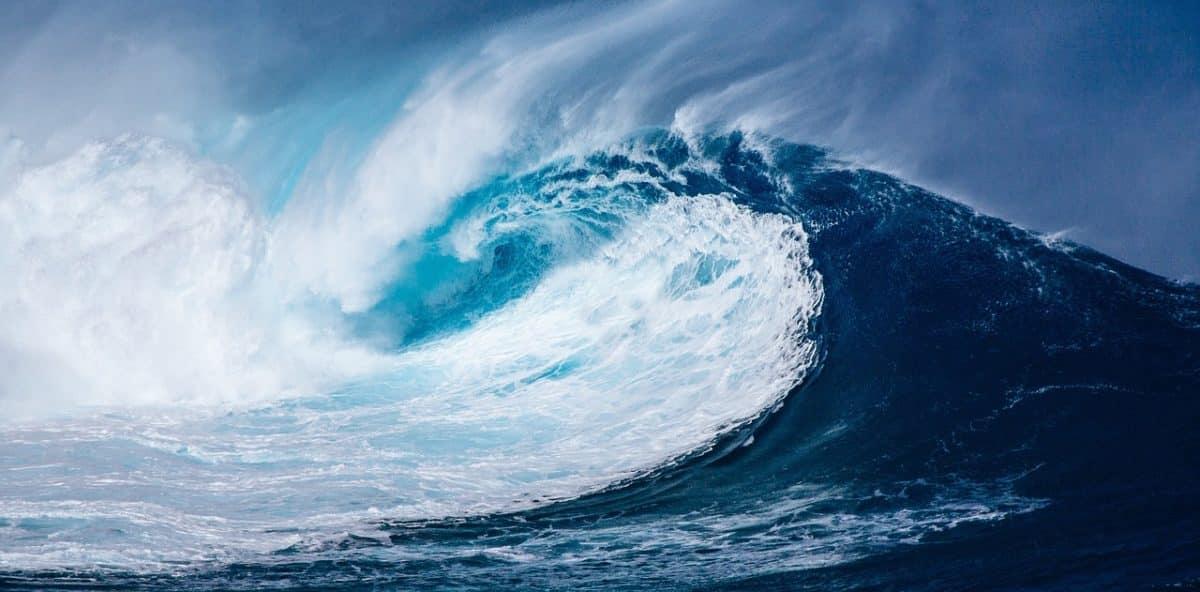 Téged is lenyűgöz az óceánok világa? Ettől a videótól eláll majd a lélegzeted!