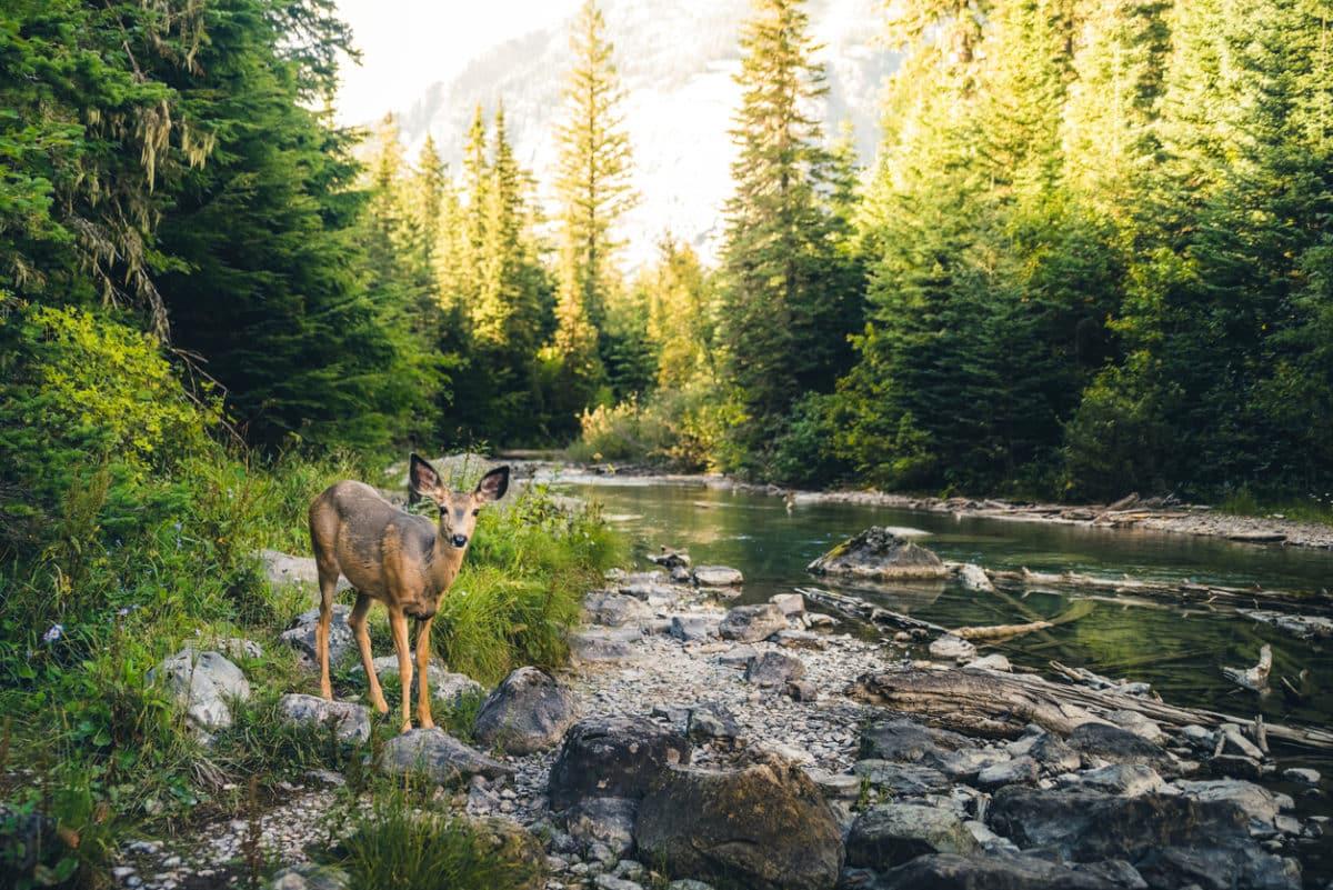 Gyönyörű erdők, nem csak ősszel: ezeket a fotókat látnod kell!