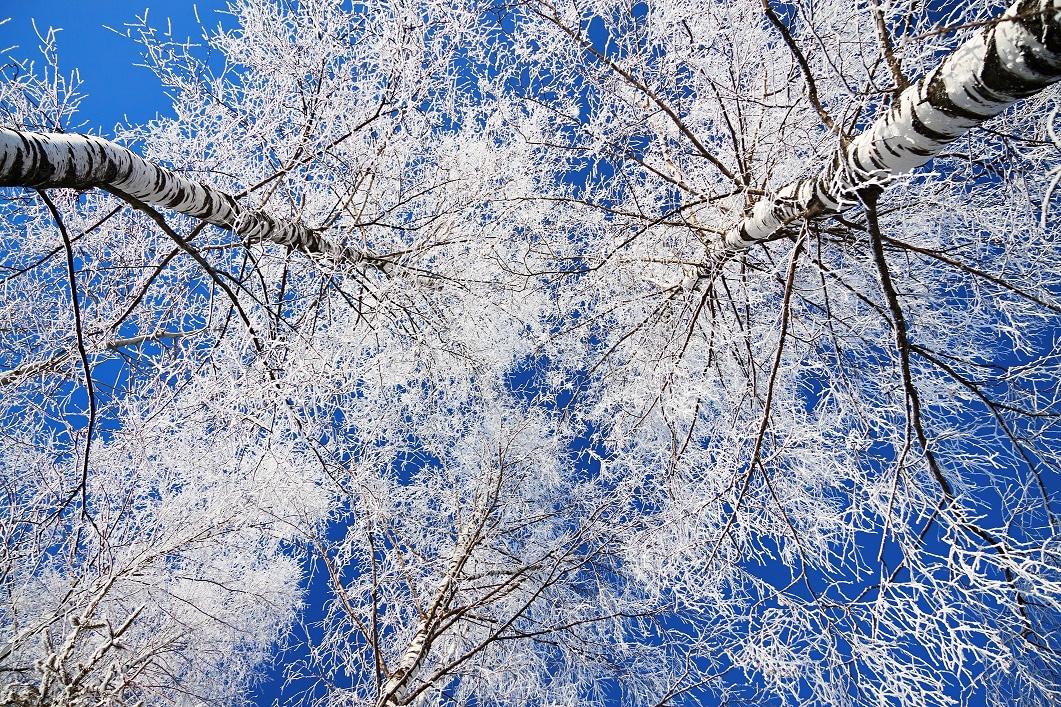 Zúzmara vagy dér? – Fenséges látványt kölcsönöznek a téli tájnak, de vajon hogyan tudjuk megkülönböztetni őket?