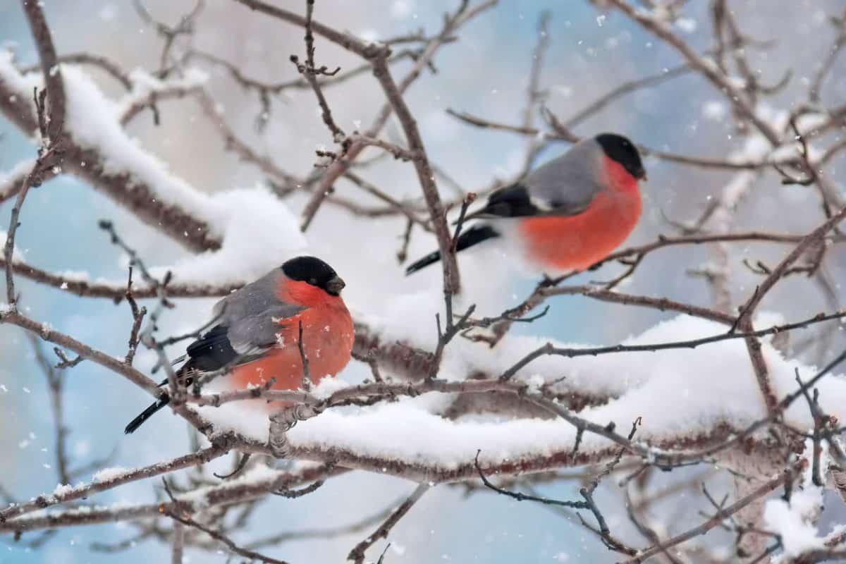 Ezeket a szabályokat érdemes betartani, ha téli madáretetésre készülsz
