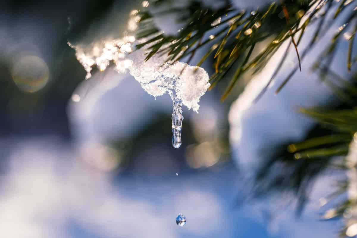 Fagyvédelem – Így óvd meg növényeid a fagytól!