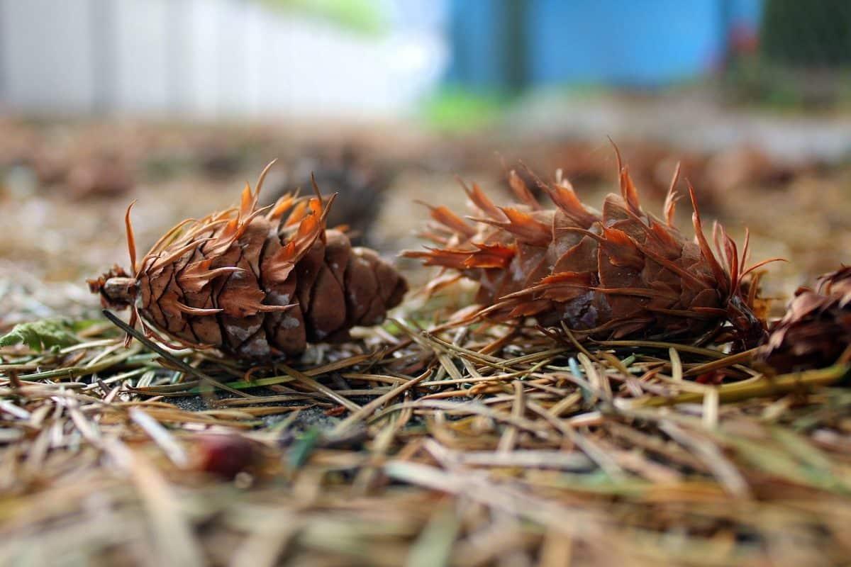 Kókadozó karácsonyfák – Így szabadulj meg tőlük